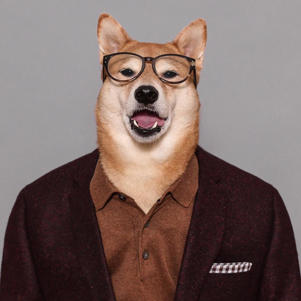 Scout Top 10 Cutest Dogs Who Are Internet Famous
