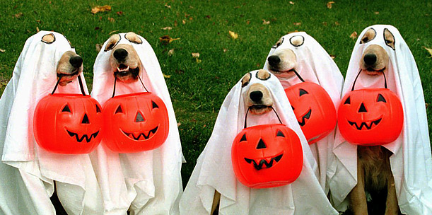 Scout Halloween Safety Tips For Kids And Pets