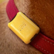 Scout - Pet Collar